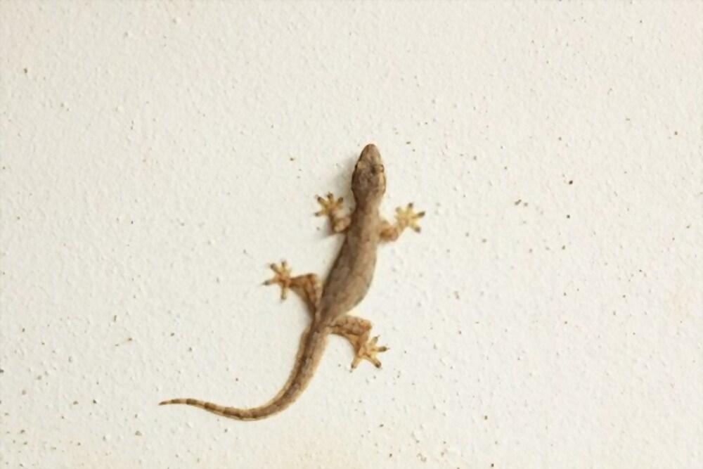 lizard pest control in bangalore